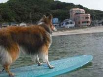 15歳での初サーフィン