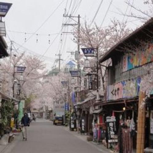 阿蘇神社参道2012(春)