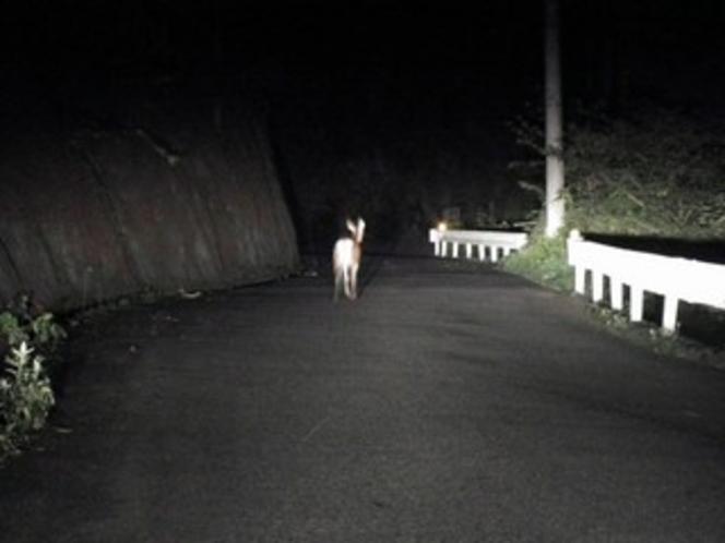 まほーばの森への道で出会った子鹿