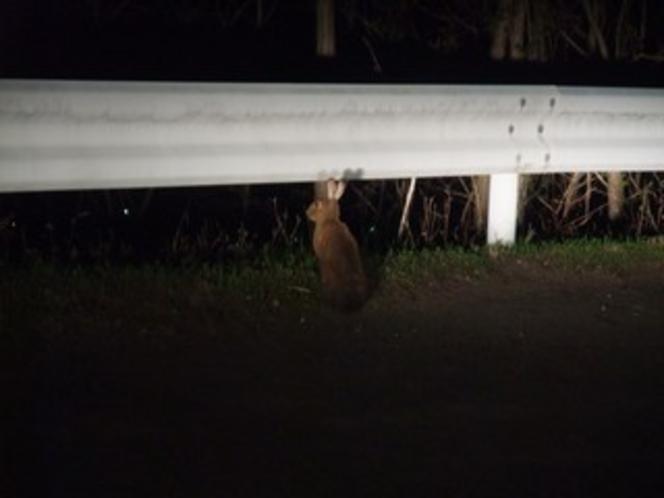 まほーばの森への道で出会った野ウサギ