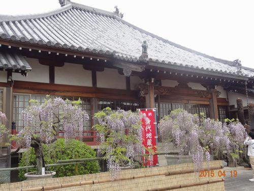 石井町のふじまつり(地福寺)