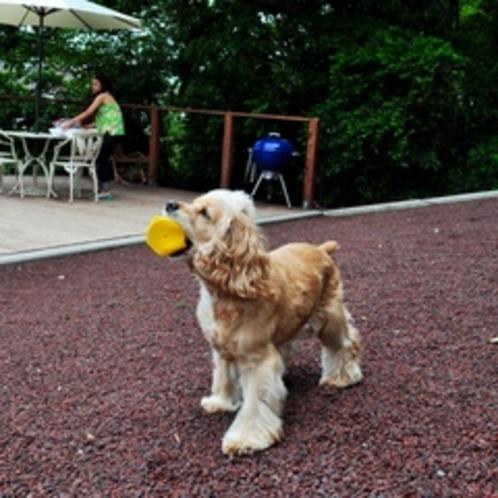 火山砂を使った愛犬の足腰に優しいドッグラン