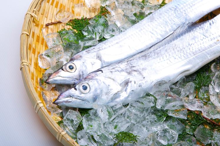 水俣港周辺では太刀魚の海釣りを楽しむことができます。