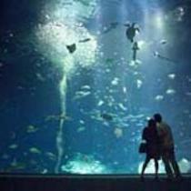 *[アクアワールド]当館より車で約15分/サメやマンボウの種類は日本一!沢山の海の生き物と出会える。