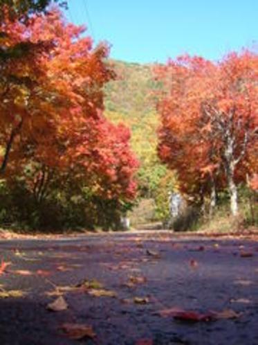 秋の周辺の景色