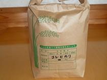 契約農家の栃木コシヒカリ