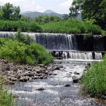 *初夏の河川敷