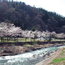 *春の河川敷