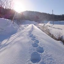 *まっさらな雪の上に足跡を付ける。早起きした者の特権です!