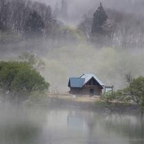 *霧に浮かぶ水没林。幻想的な光景が広がります。