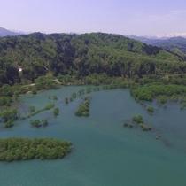 *4月下旬~5月中旬に見ることが出来る新緑の水没林