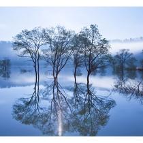 *[春/水没林]朝霧の中の「水没林」は幻想的でドローン撮影のために海外のお客様もくるほど!