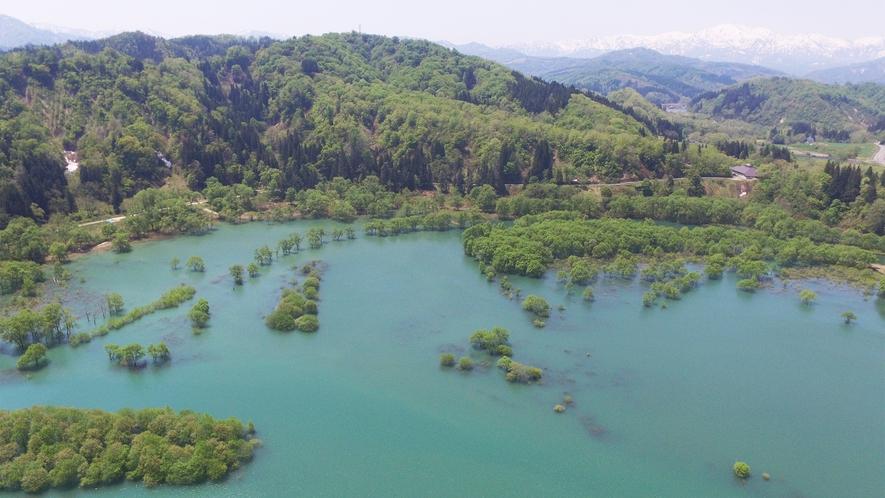 *[春/水没林]4月下旬~5月中旬限定の風景。2017年の「水没林」。水位や色は時期や年によって様々