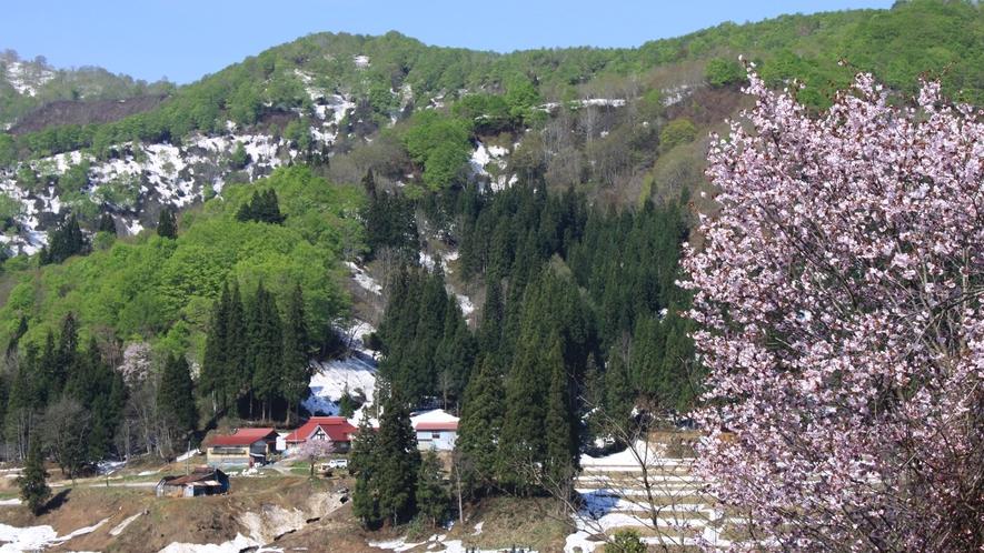 *周辺(春)残雪と桜のコントラストを楽しめます。
