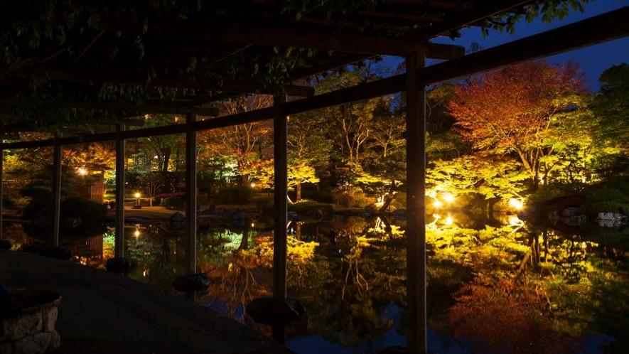 日本庭園 紅葉 ライトアップ
