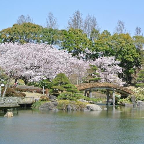 日本庭園 桜 3月下旬から4月上旬