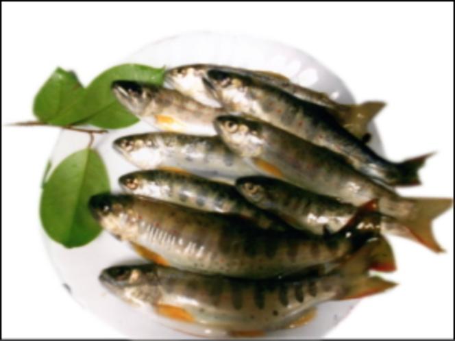 前の川で釣れる魚(山女:ヤマメ)