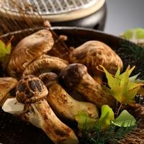 信州上田産の松茸が味わえるのは、10月上旬から11月上旬ぐらいまで