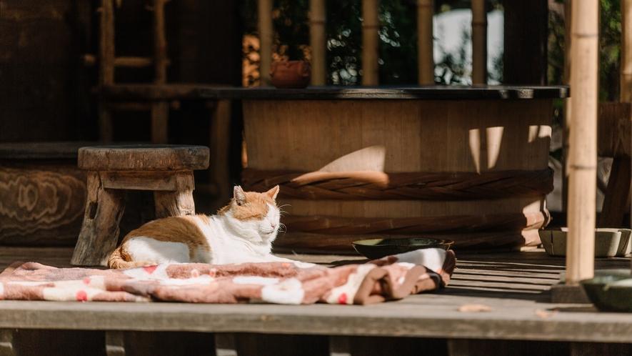 ■猫ちゃん のんびり流れる別所の時間