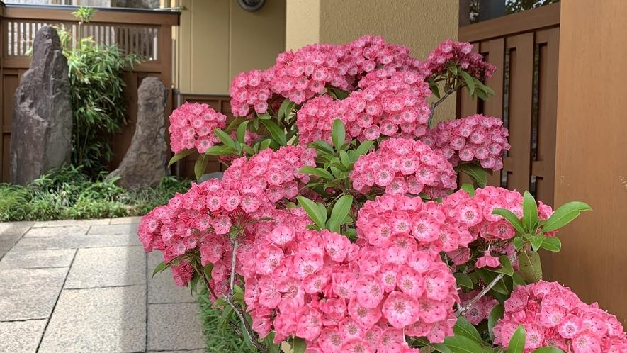 ■初夏に咲くカルミアの花 入口の様子