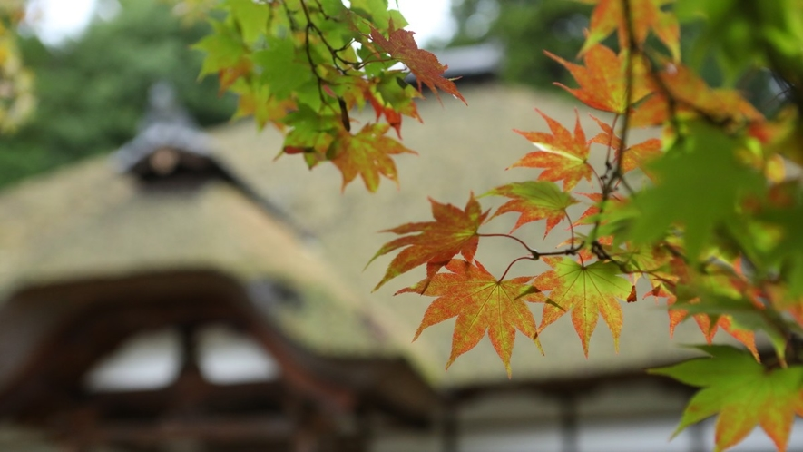■四季折々の美しさが楽しめる別所温泉