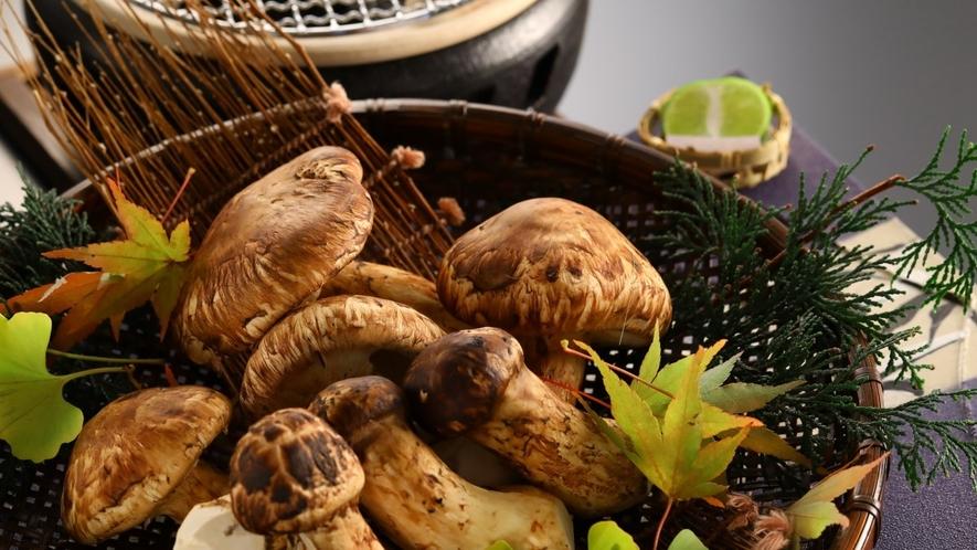 ■信州上田産の松茸 10月上旬から1ヶ月ほど楽しめます