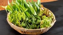 【諏訪の素材】山菜。田舎の旬の食材を召し上がってください。