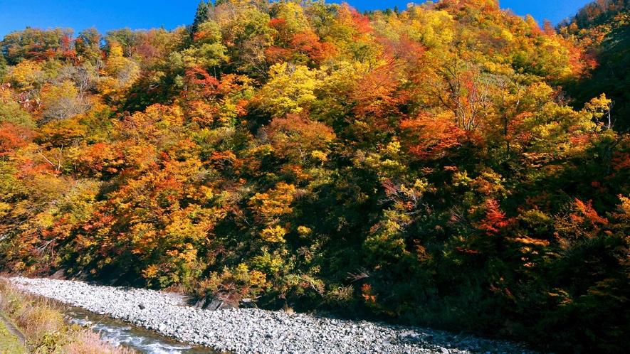 【清津峡・秋】四季で変わる渓谷の美しさをお楽しみください