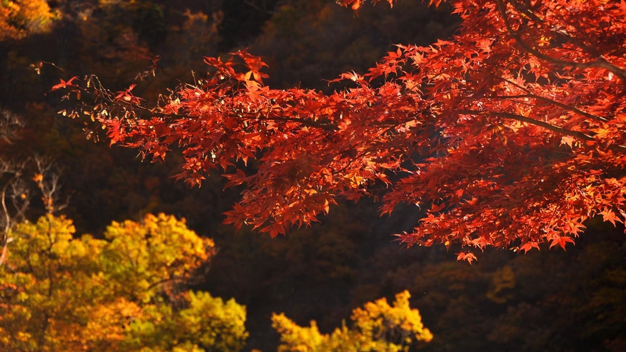 【清津峡・秋】時期により色鮮やかな紅葉が見られます