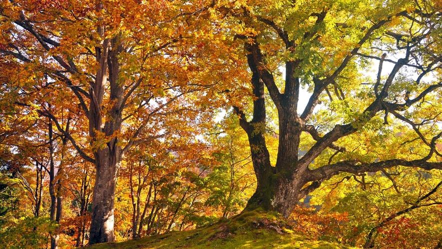【清津峡・秋】色とりどりの紅葉が映し出す秋色に染まる森