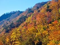 【清津峡・秋】色づく秋は清津峡が一番賑わう季節です