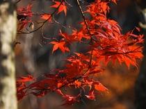 【清津峡・秋】季節の移ろいを感じる、自然からの紅い贈り物