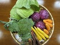地元産の新鮮お野菜
