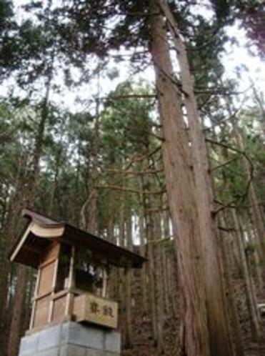 東沢の大ヒノキ「山の神」