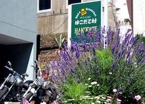 夏の始まり…ラベンダーが咲いた、二輪派が訪れた♪