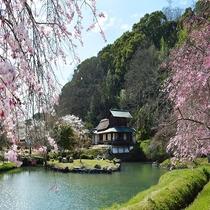 近水園の桜