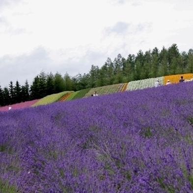 【夏秋旅セール】 ラベンダーと花々が咲き乱れる♪ 夏期特別プラン(1泊2食付)