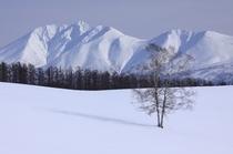 冬の富良野・美瑛 11