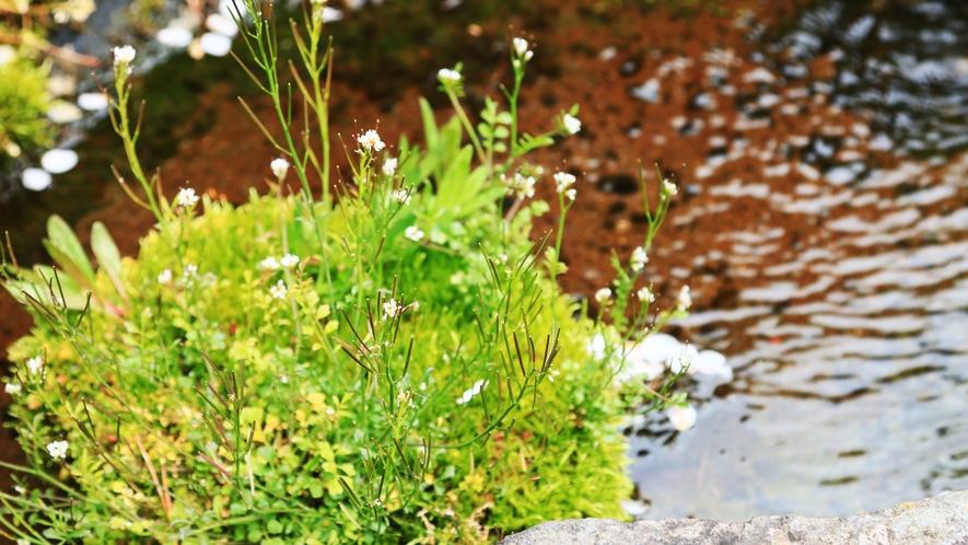 庭園◆湧き水が流れています