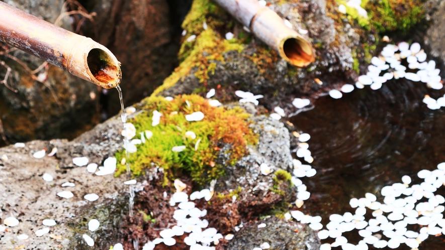 バナジウム入熔岩水◆当館ご利用のお客様への特典です