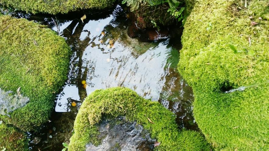 庭園◆自然の癒やしを感じます