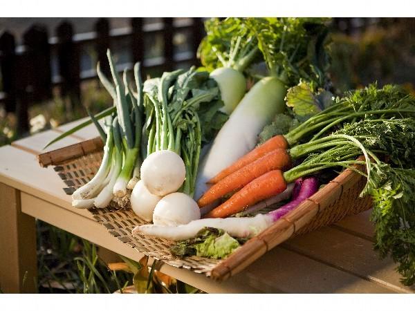 新鮮野菜を使用してます