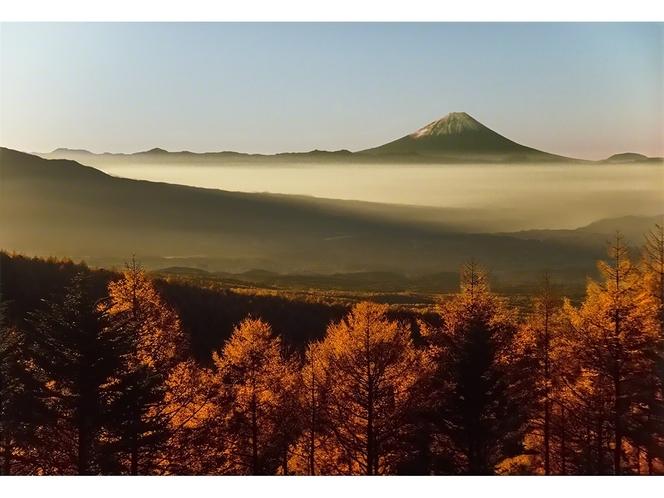 黄葉の落葉松の大群落と富士