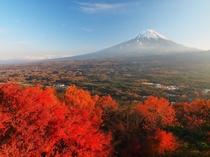 広大な青木ヶ原樹海の錦織りなす紅葉