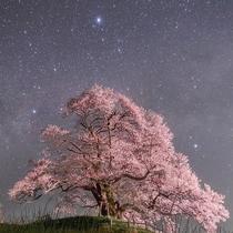 星空に映える大糸桜