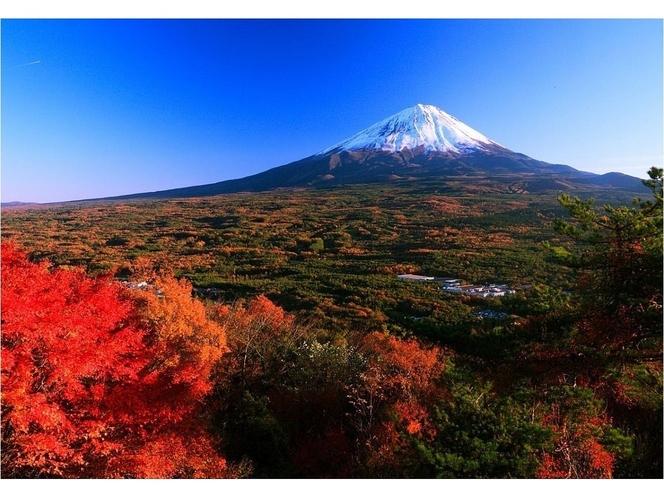 広大な青木ヶ原樹海の錦織りなす紅葉と白雪の富士山