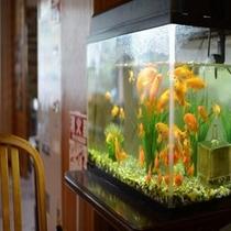 玄関入り口の金魚
