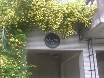 玄関わきのもっこう薔薇です。