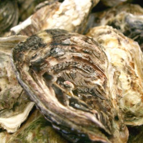 【殻付カキ】的矢湾で養殖される清浄浄化を施した安心・安全なカキ