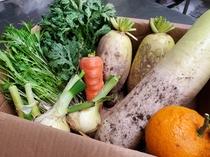 契約農家さんのお野菜